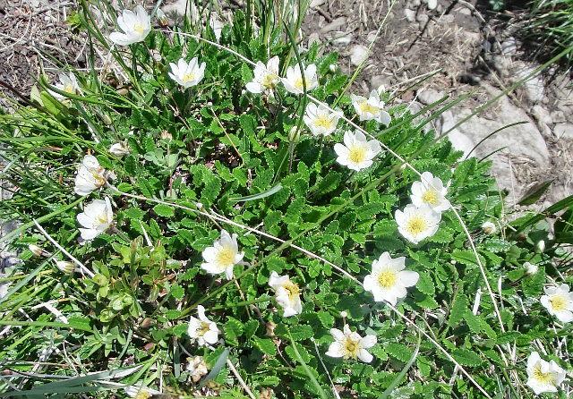 Allgäu erleben - Blumen der Allgäuer Alpen